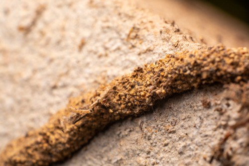 How to identify Termite Infestation?
