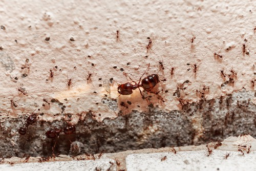 Can A Pest Control Company Kill All Kinds Of Pests?
